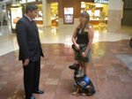 Dog training in colorado springs