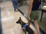 Service dog training in colorado